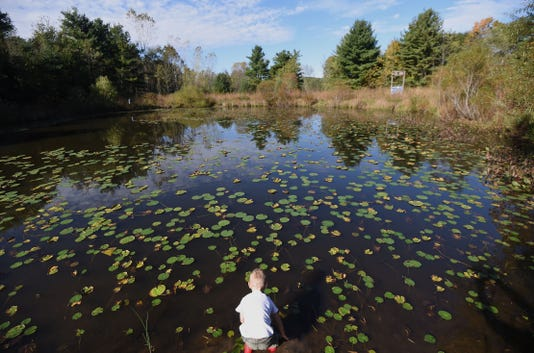 Mnj 1011 Wild Art Gorman Pond