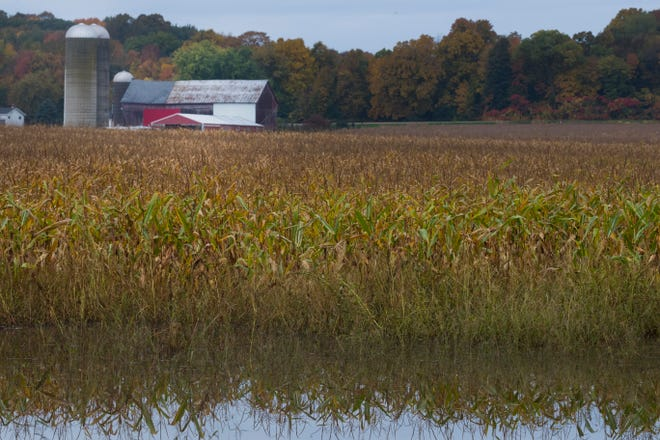 A cornfield is water-soaked Wednesday near the Town of Stockbridge in Calumnet County. Waterlogged fields across the state have slowed the fall harvest.