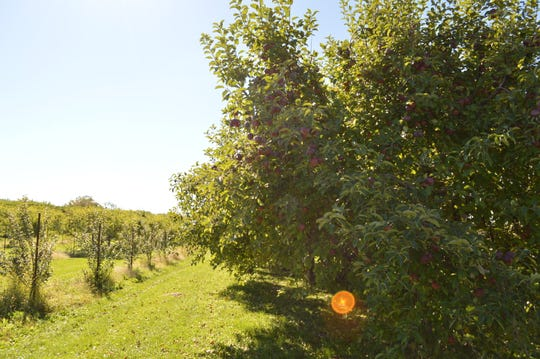The Elegant Farmer's apple orchard is open from10 a.m. to 5 p.m. Saturdays and Sundays with Oct. 21 being its last day for picking. If weather permits, it will also be open Oct. 27.