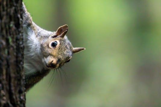 #stock Squirrel Stock Photo