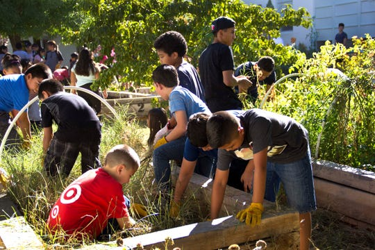 Students from Valley View Elementary School tend to the school's community garden, working alongside students from Las Cruces High School. The garden had become overgrown over the summer, and environmental science classes from Las Cruces High offered to lend a hand on Oct. 3.