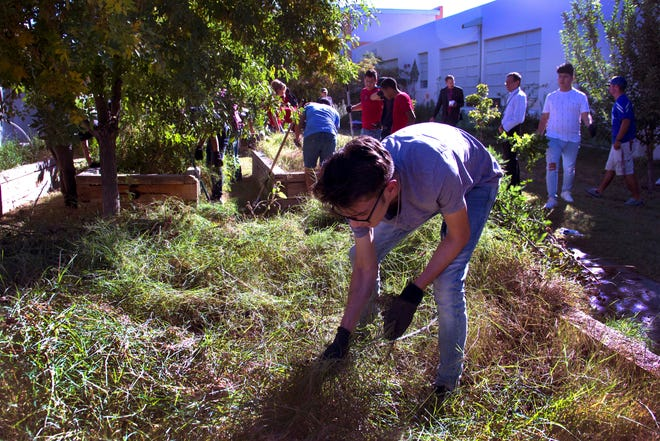 Students from Las Cruces High School pull grass and weeds in the community garden at Valley View Elementary School on the morning of Oct. 3.