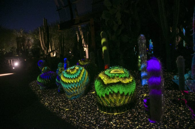 Lights from the new exhibit, 'Electric Desert' wash over the cacti at the Desert Botanical Garden in Phoenix, Ariz. on Sept. 27, 2018.  Music and moving lights create a unique experience.