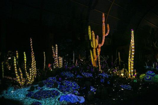 Electric Desert at Phoenix Desert Botanical Garden