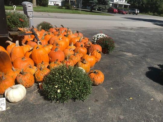 Pumpkins at Maier's Farm in Avon