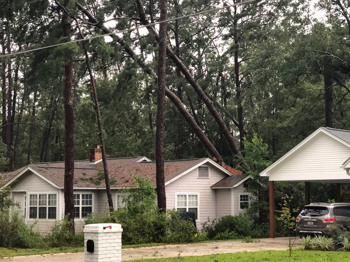 A house with two large pine trees leaning precariously.  Devastation lays in the wake of Hurricane Michael which made landfall in Mexico Beach on Wednesday afternoon.