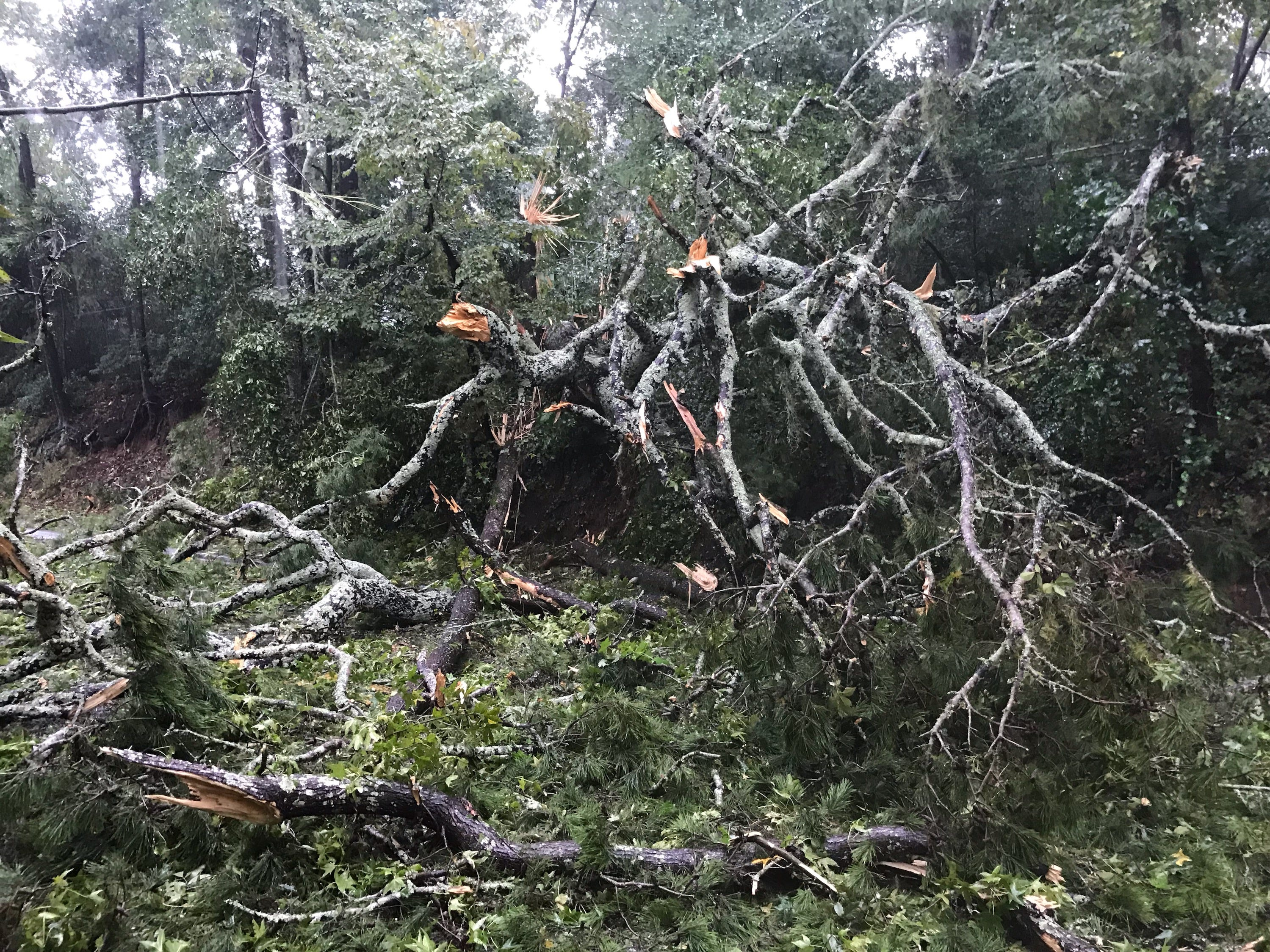 In downtown Tallahassee, branches are crashing down as Tallahassee begins to experiences some of the worst from Hurricane Michael on Wednesday, Oct. 10, 2018.