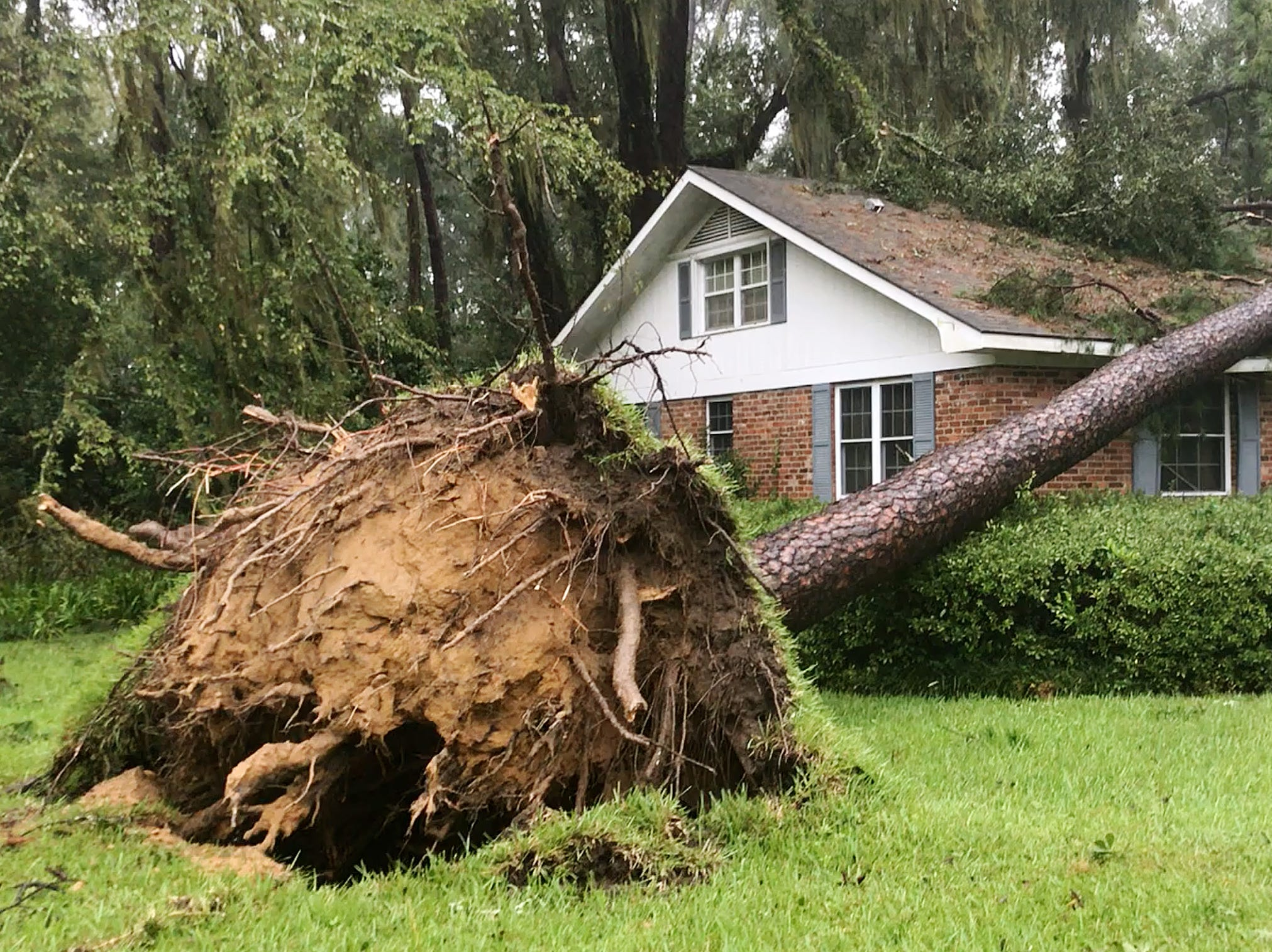 Hurricane Michael knocked down hundreds of trees on Wednesday (10/10/18) in Tallahassee, Fla.