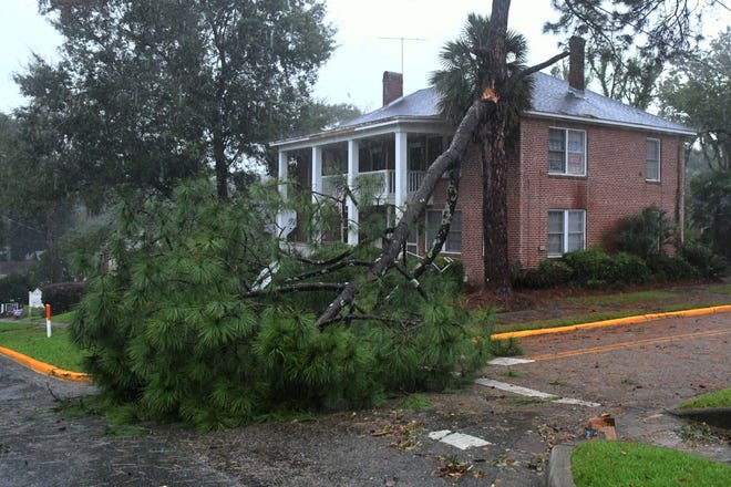 On Wednesday, Oct. 10, 2018 as Hurricane Michael makes landfall, trees, like the one pictured at the corner of Park Avenue and Meridian Street in Tallahassee are too weak to withstand the extreme wind.