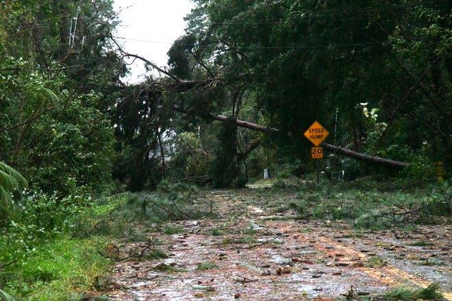 Throughout Tallahassee trees and limbs have fallen, blocked roadways and damaged homes after Hurricane Michael leaves the Florida panhandle on Wednesday, Oct. 10, 2018.