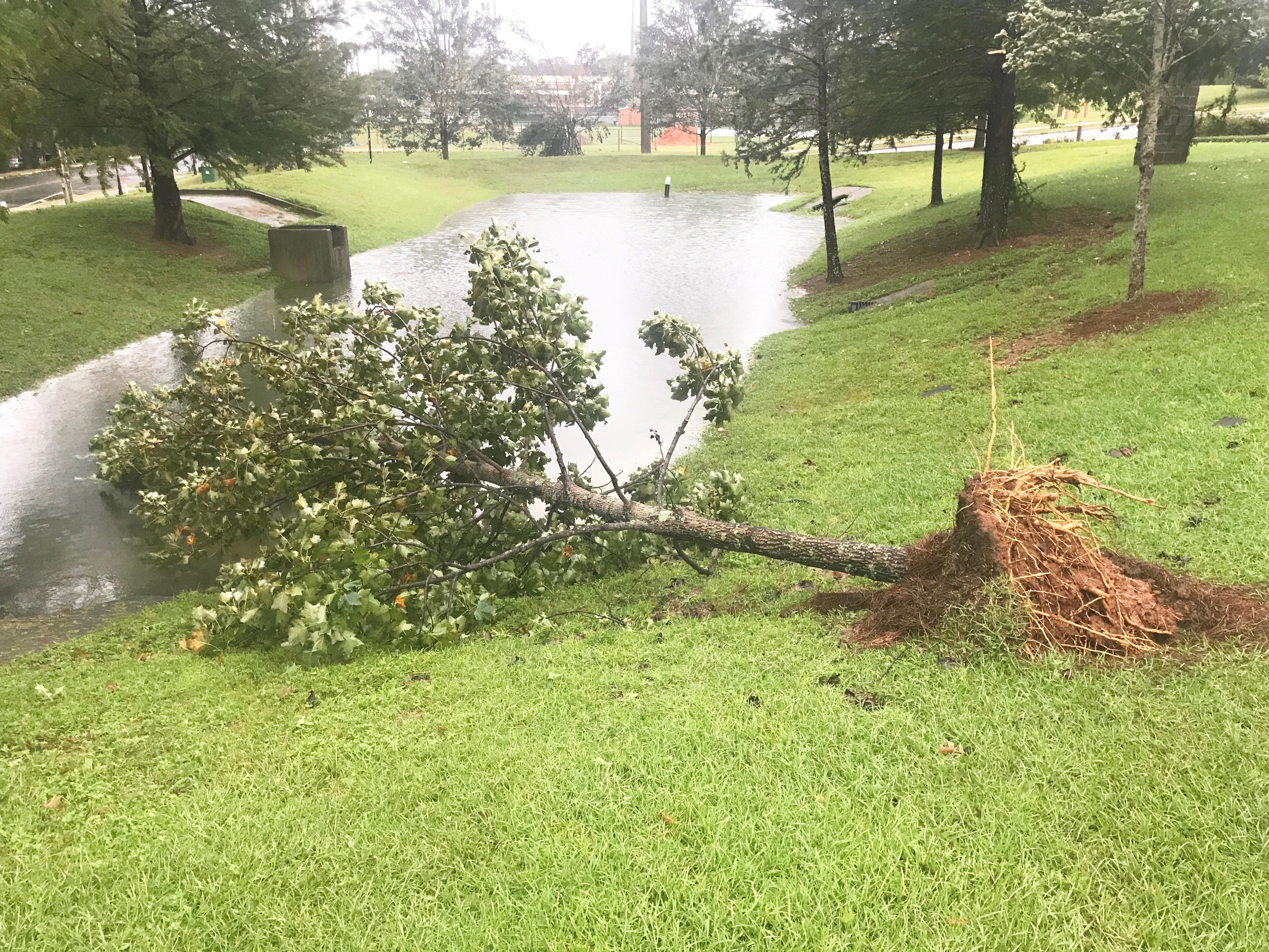 Hurricane Michael's strong winds knocked down this tree outside the Hansel E. Tookes, Sr. Student Center.