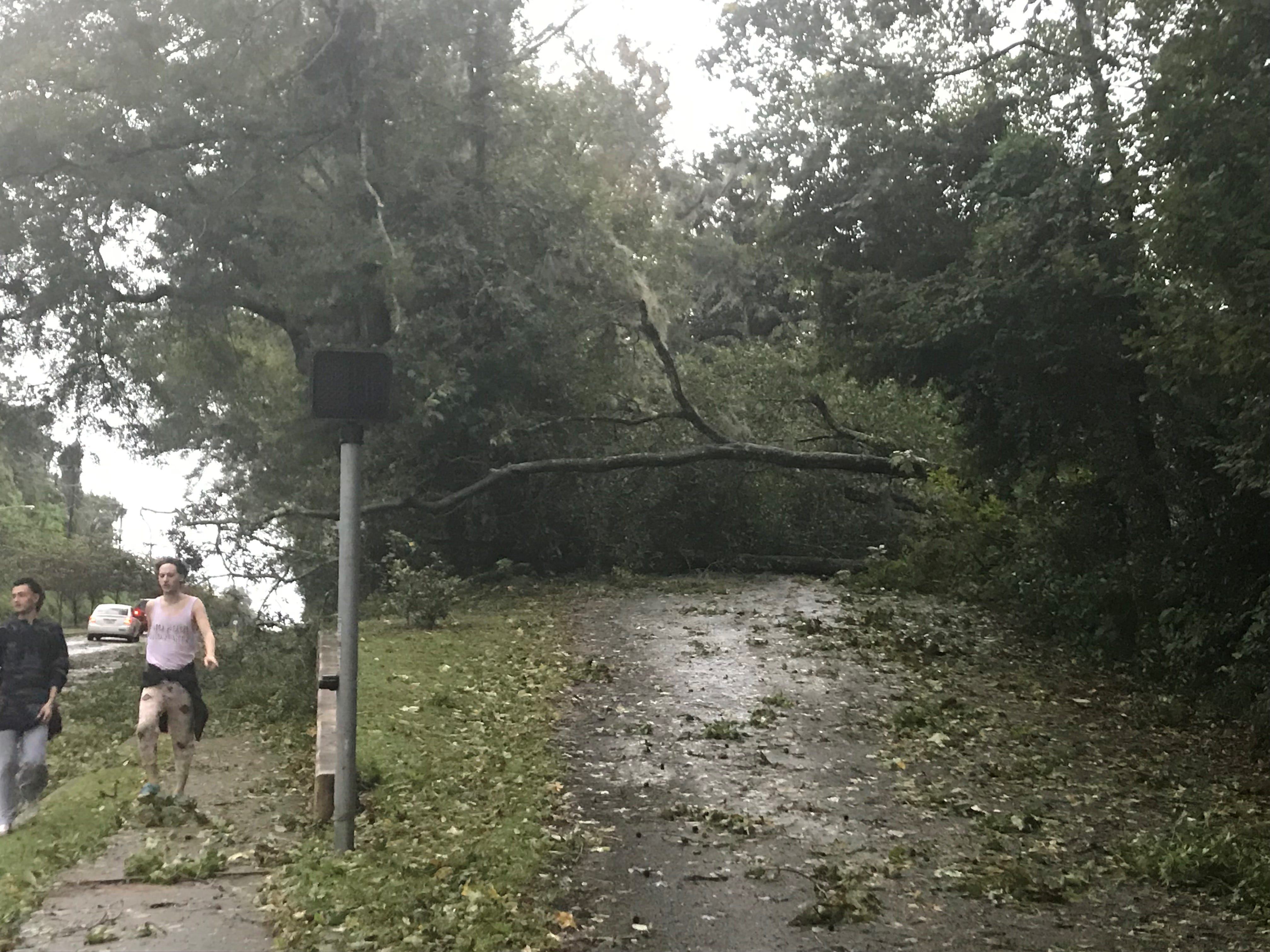A fallen tree blocks Briarcliff Drive off Mahan near Leon High