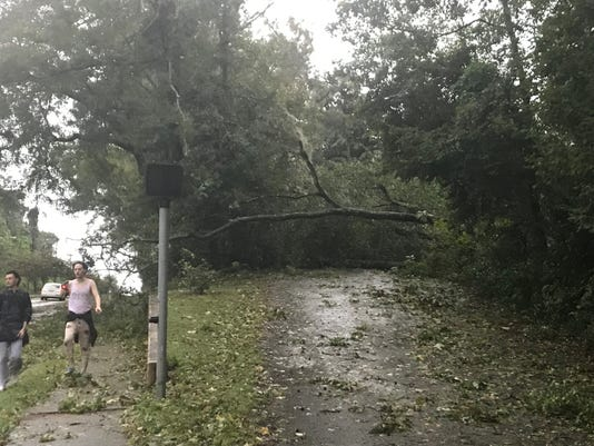 A Fallen Tree Blocks Briarcliff Drive Off Of Mahan Drive Near Leon High