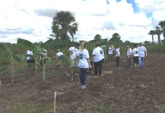 Employees from Harbor Point Publix in Vero Beach helped start a small banana plantation at Save the Chimps. The sanctuary also is looking for tree donations to expand its edible garden.