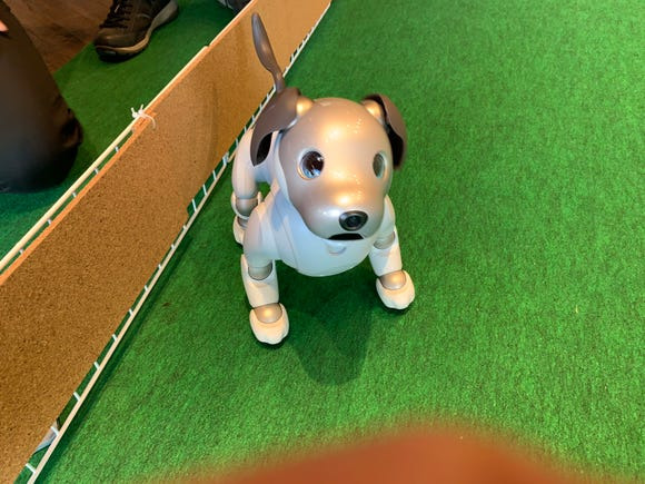 Aibo, the robotic dog
