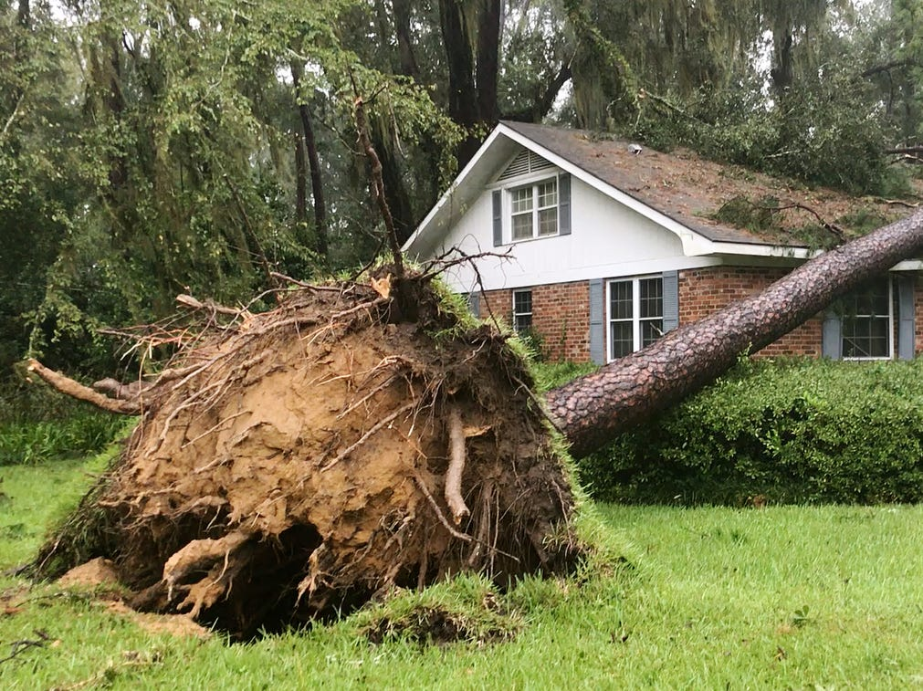 Hurricane Michael knocked down hundreds of trees on Wednesday, Oct. 10, 2018, in Tallahassee, Fla.