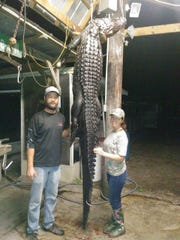 Richard Hunt, left, bagged this big alligator from an Upper St. Johns River Water Management District canal earlier this week.