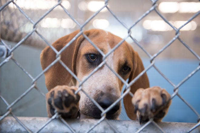 Michigan District 8 State Senator Peter Lucido is proposing a series of bills that would seek to increase animal abuse reporting requirements and regulate animal rescue operations in the state.