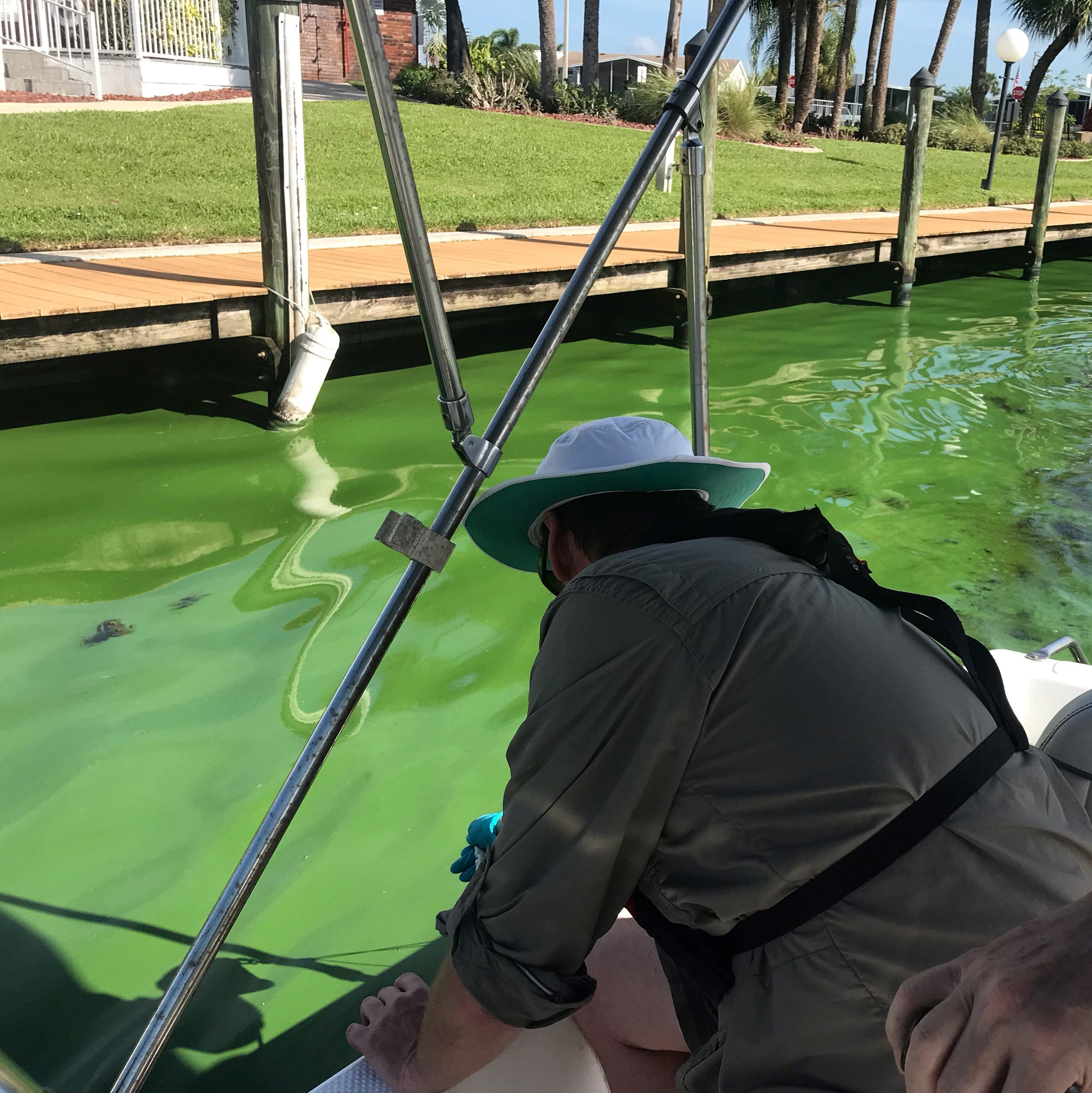 Our health depends on further research into algae blooms