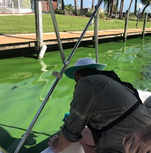 Algae researcher James Metcalf samples a North Fort Myers canal for toxic cyanobacteria.