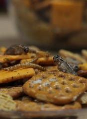 Insects come in many flavors, these are sour cream and onion crickets and cheddar cheese larvae, to match your favorite snack mix blend.