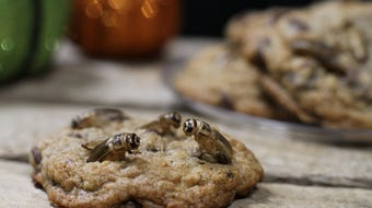 Crickets, grasshoppers and worms punch up the scary meter a notch when it comes to these Halloween treats.