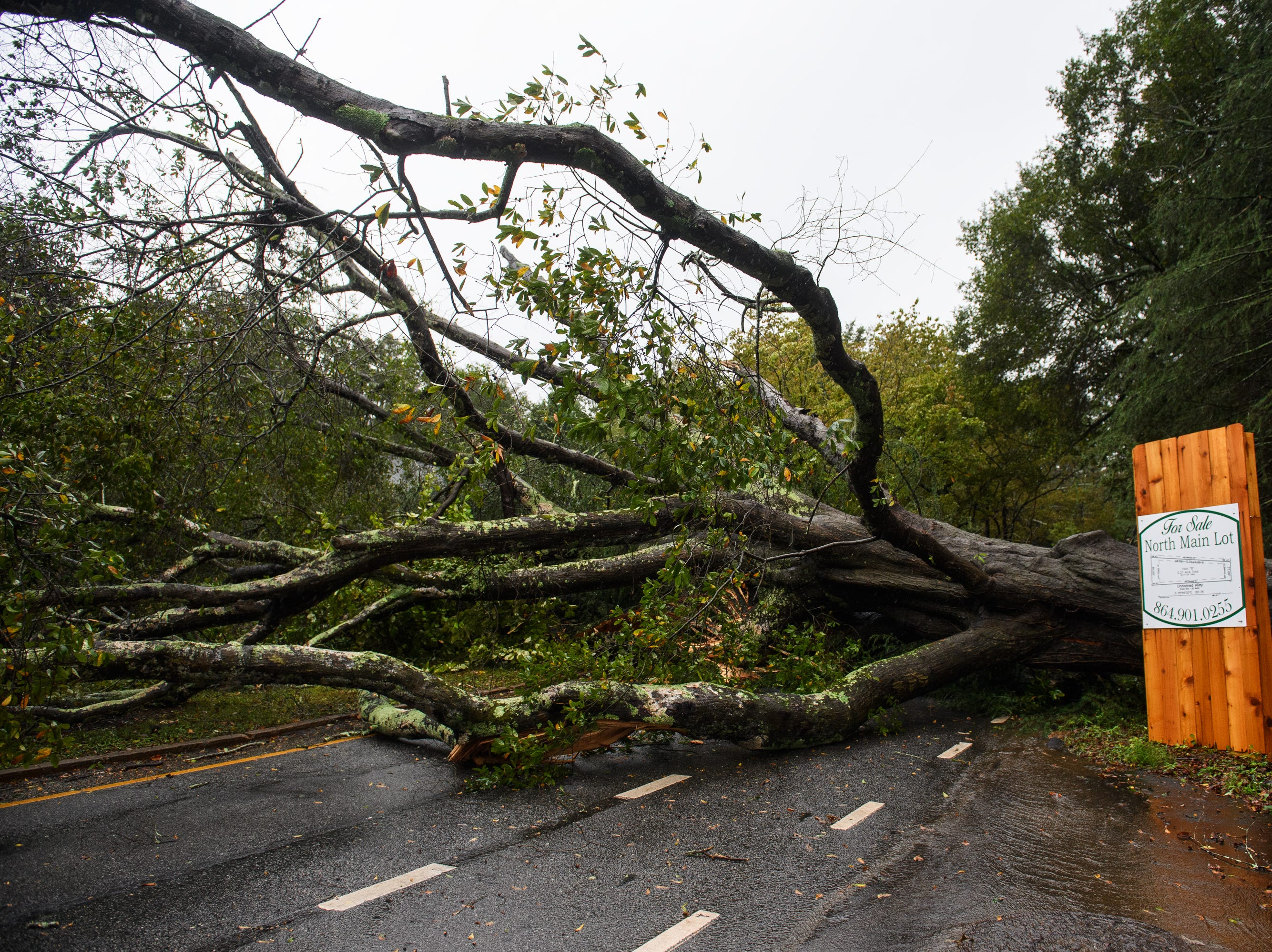 A down tree on North Main Street as Tropical Storm Michael hits the Greenville area on Thursday, Oct. 11, 2018.
