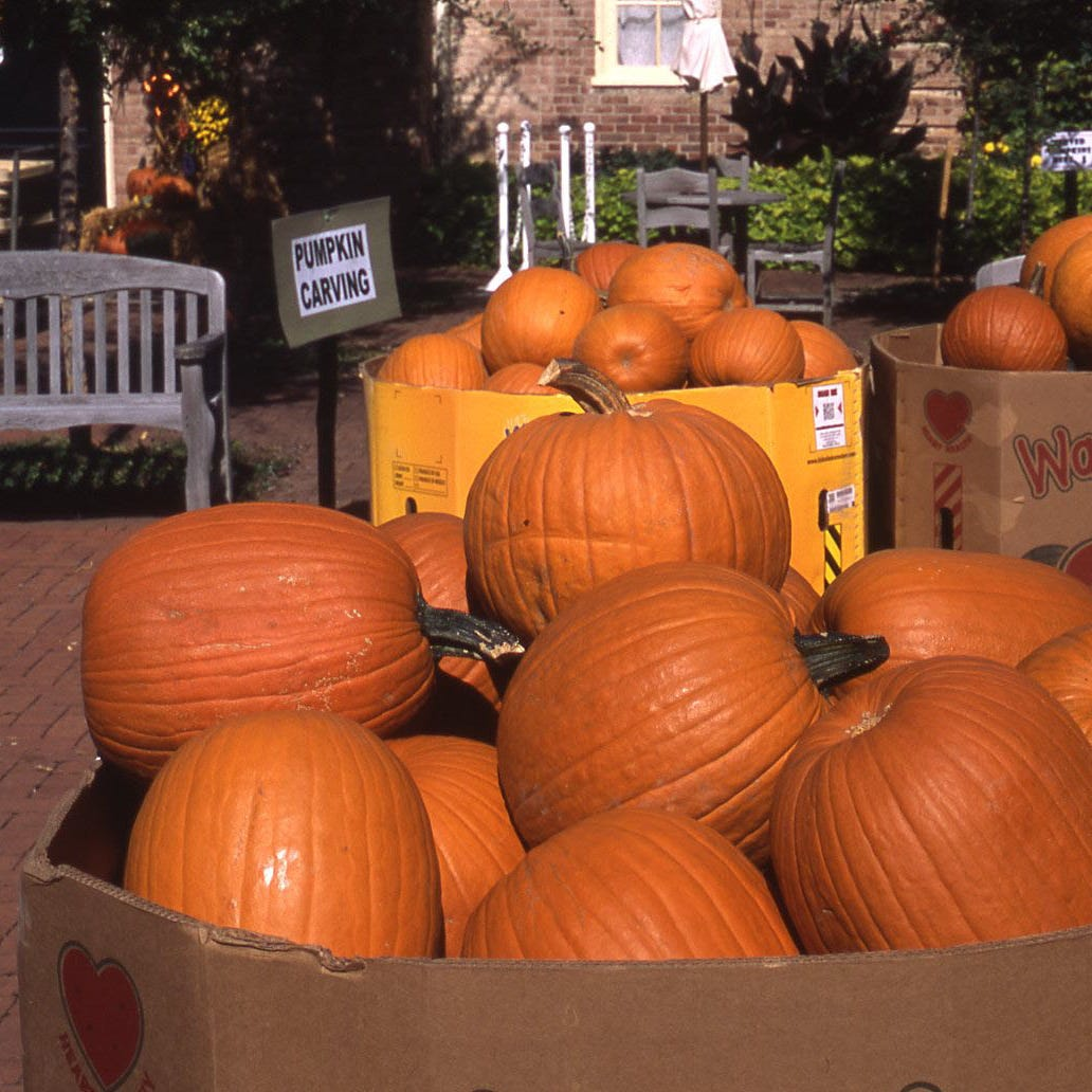 In The Garden | Kingwood's Great Pumpkin Glow is this weekend