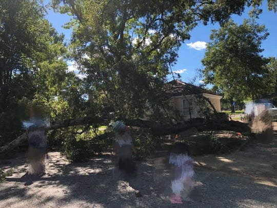 A photo shared on the Maxwell Gunter Residents United Facebook page shows children, blurred out, around a large branch that had fallen on Gunter Annex.