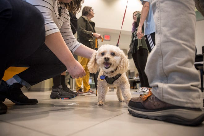 Faculty and students at Ball State University gather with dogs and donuts for a midterm stress reliever. The annual event for the College of Information Communication and Media provides a reprieve for students and chance to casually interact with faculty.