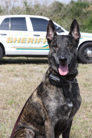 K-9 Bandit of the Collier County Sheriff's Office was CCSO's longest-living K-9 after retirement. He died Sept. 29, 2018.