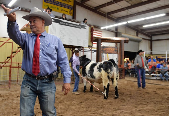 Herb Borden assisting the 2018 Junior Livestock show on the left, while Marc Dominguez displays his first place Short Steer in the background.