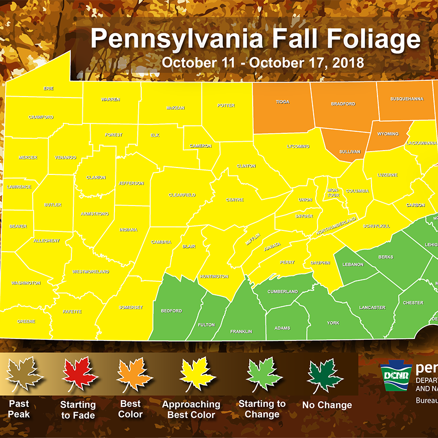 Fall foliage is starting to peak in parts of Pa. Here's where the colors are this week.