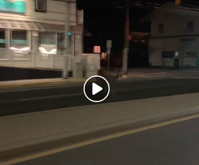 Screen grab of deer running through Dewey Beach from video by Facebook user Mike Ridings.