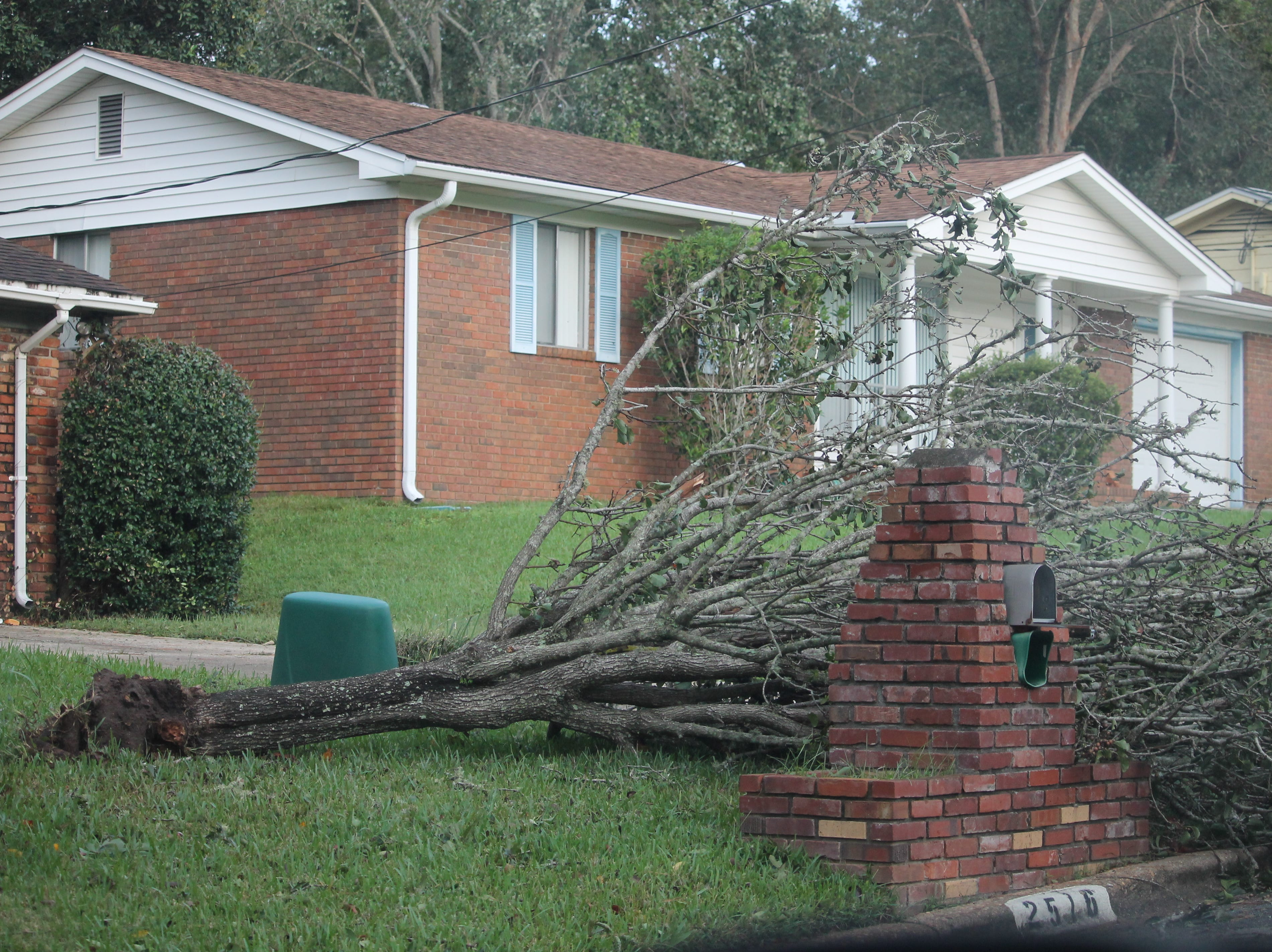 Downed tree in Tallahassee.