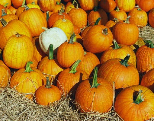 tips for getting the great pumpkin at halloween