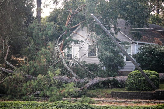 Downed tree drags down power lines off Tennessee St. in Tallahassee