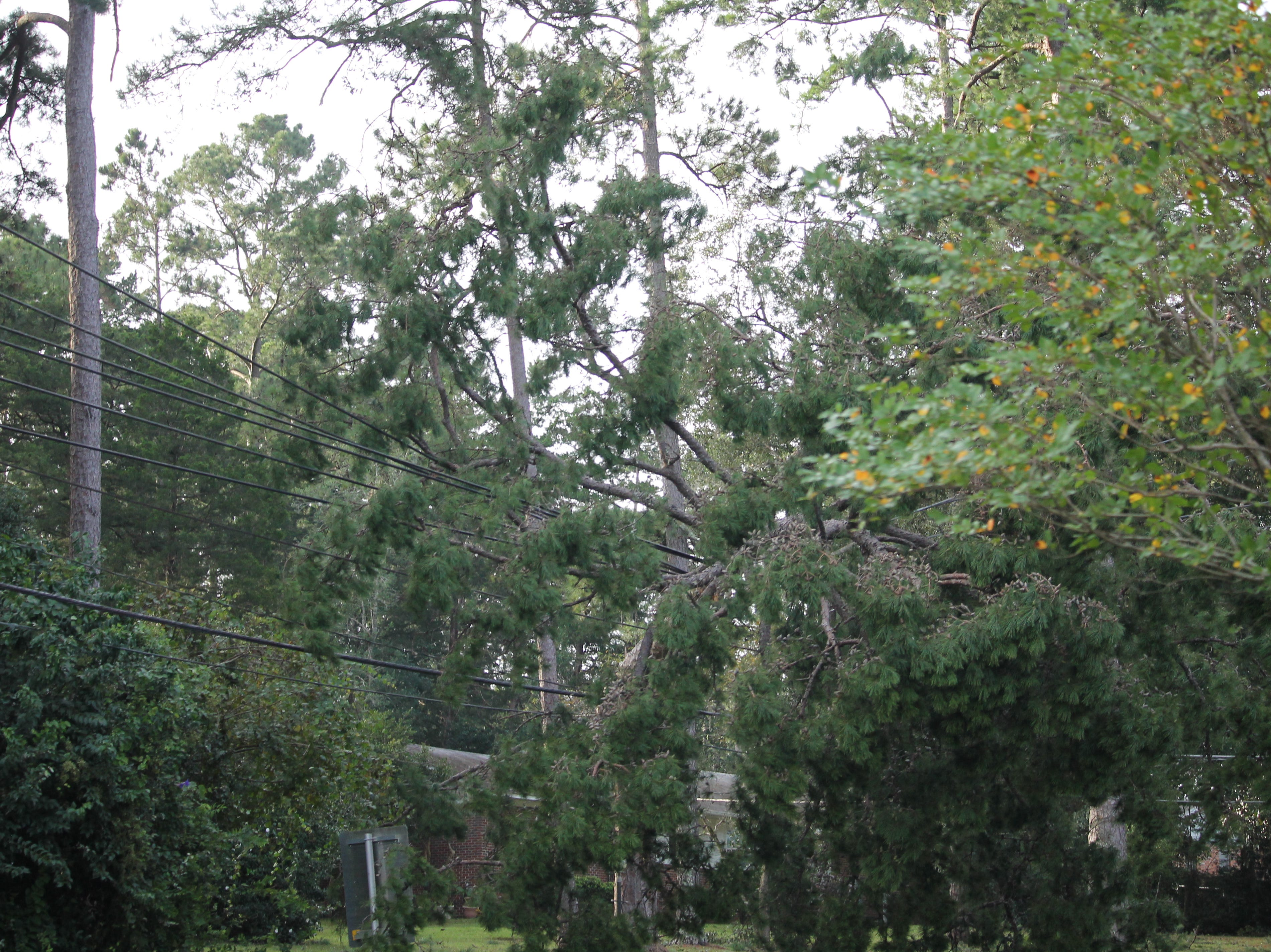 Downed tree on Thomasville Rd. in Tallahassee.