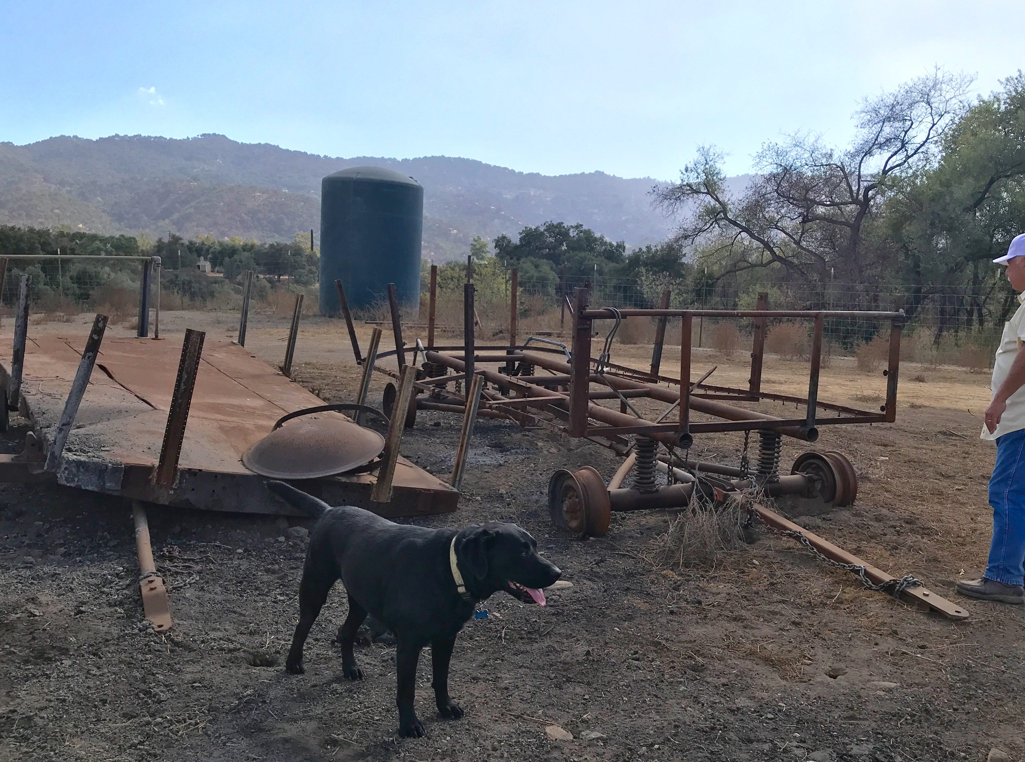DeWayne Boccali and his dog Buster stand by the remains of two trailers used for the annual haunted hayride at Boccali's restaurant in Ojai. Because of damage caused by the Thomas Fire and the ongoing drought, the hayride will not take place this year.