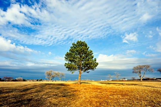 Tree near Oak Lake of Lincoln, Nebraska.