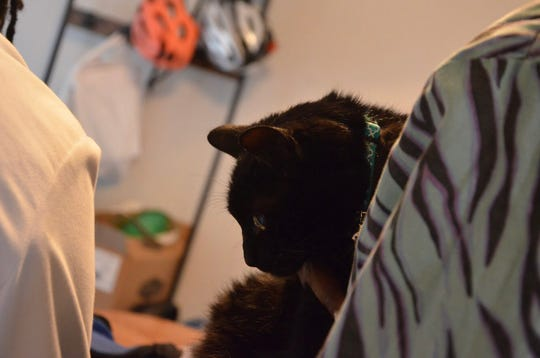 Ruckus does not like cars or carriers, which is why her owner Rachel Laughlin, turned to Dr. Croom Mobile Veterinary Service.