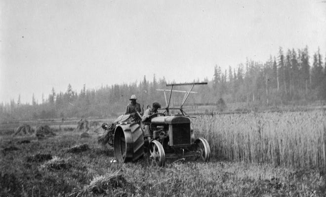 William Schold harvests wheat on his farm in Silverdale. The double steel wheels on his Fordson tractor kept it from tipping over on sidehills. The farm was located in the Clear Creek Valley alongside today's Clear Creek Trails and dog park. To see more photos from the Kitsap County Historical Society Museum archives, visit facebook.com/kitsaphistory, kitsapmuseum.org, or stop by the museum at 280 Fourth St. in Bremerton. Call 360-479-6226 for information.
