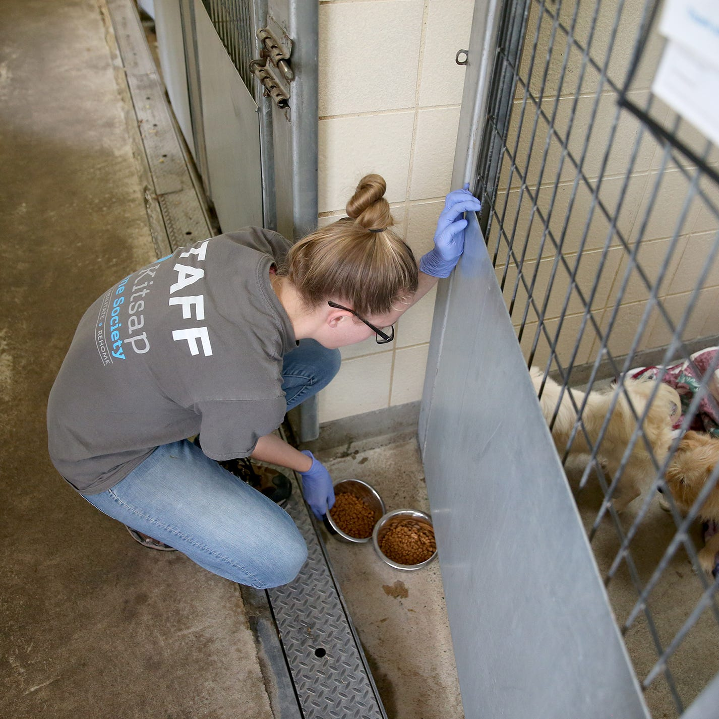Kitsap Humane Society breaking ground on $7.5 million expansion, renovation project