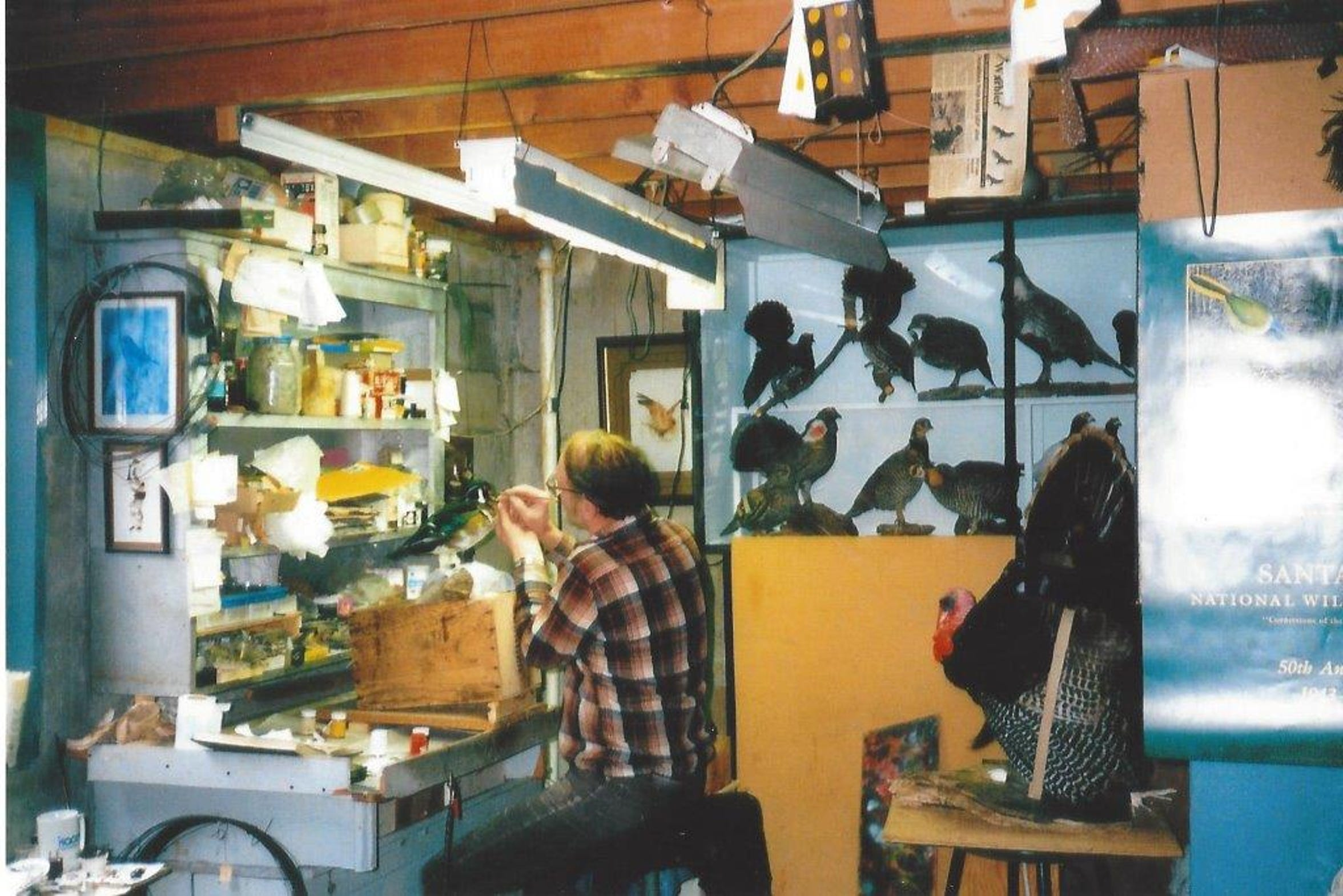 Don Bowman is regarded as one of the top 10 bird taxidermist in North America.