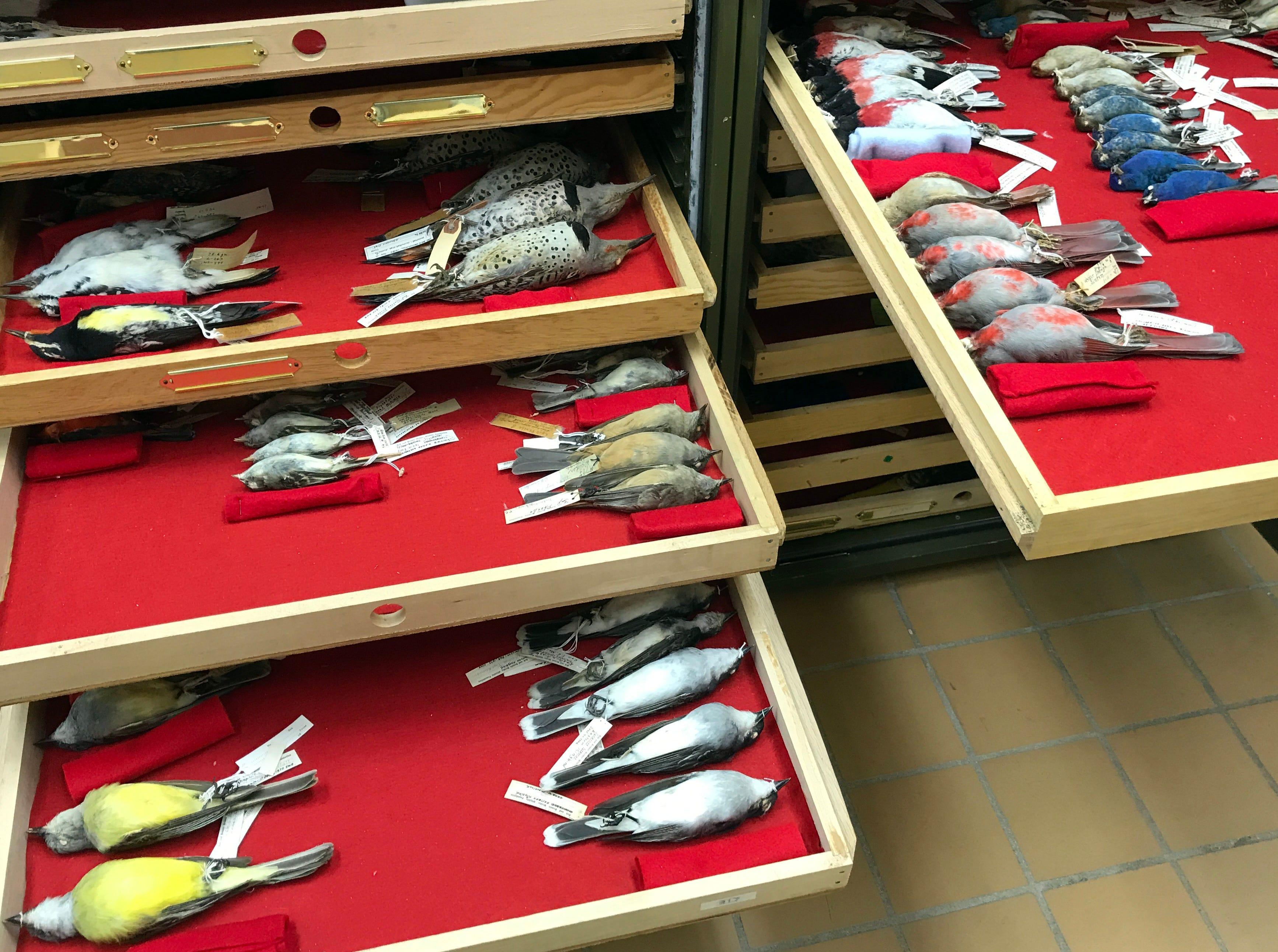 The Welder Wildlife Foundation houses hundreds of preserved wildlife specimens for research.