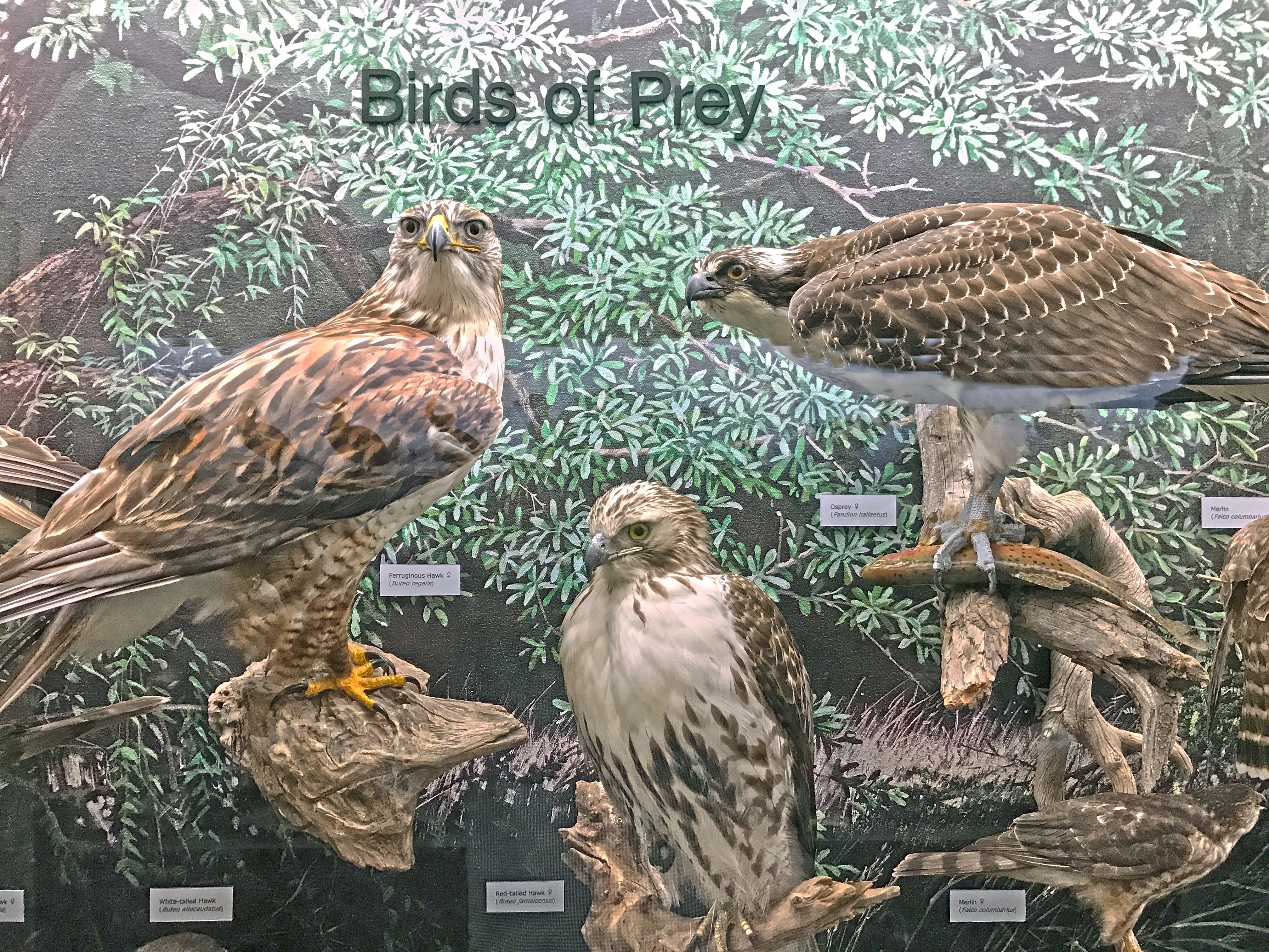 The collection is assembled by groups, such as birds of prey.