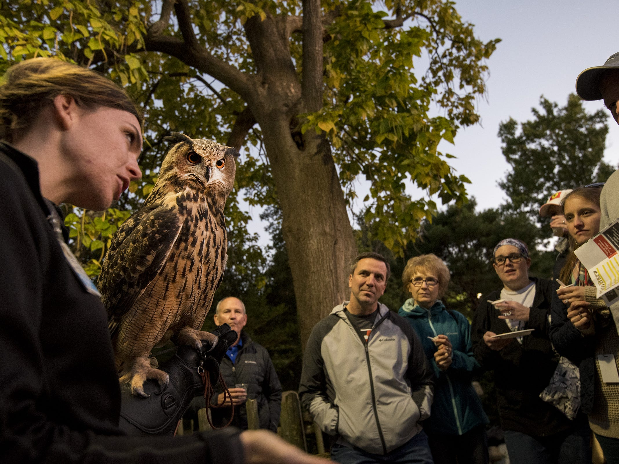 Guests get an up-close encounter with one of the zoo's Great Horned Owls.