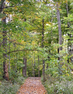 Edge Trail, a loop trail, serves as a connector trail to several other trail options at Rowe Woods in the Cincinnati Nature Center.