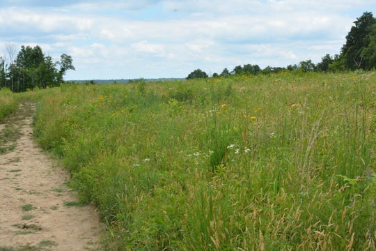 Throughout the summer, butterflies flourish in the 26 acres of native grassland that highlight the hike on Lookout Trail at Cincinnati Nature Center.