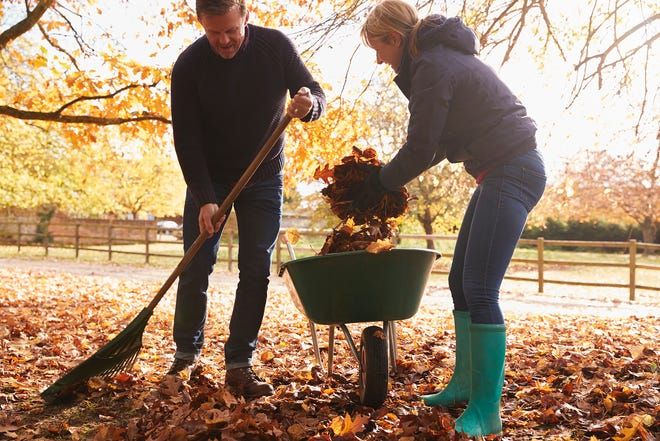 Raking Autumn Leaves in Garden
